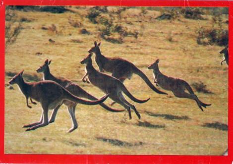 kgr-postcard